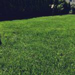 Rasenflächenpflege